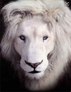 white lion eyes